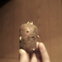 Картофельный король (2). :: сергей лебедев