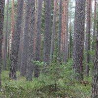 Прогулка в зимнем лесу :: Mariya laimite