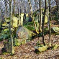 и на камнях растут деревья... :: юрий иванов