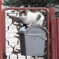 кошка-почтальон :: Михаил Жуковский