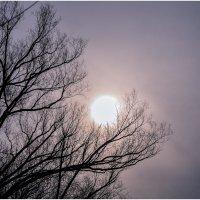 Февральское солнце уснуло на ветках :: Ренат Менаждинов
