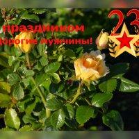 С Днём Защитника Отечества! :: galina tihonova