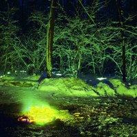 Светопредставление в зимнем волшебном лесу. :: Василий Капитанов