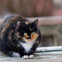 Сидел лупатый кот на лавке Следил за бомжеватой шавкой.... :: Анатолий Клепешнёв