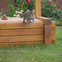 котёнок в прыжке :: Рома Губский
