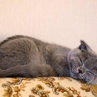Спят усталые игрушки! :: Александр Земляной