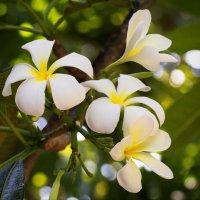 Цветы :: Юрий Кольцов