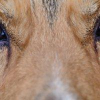 Эти глаза напротив... :: Юрий Скрипченков