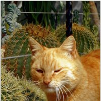 Колючий взгляд смотрителя кактусов... :: Кай-8 (Ярослав) Забелин
