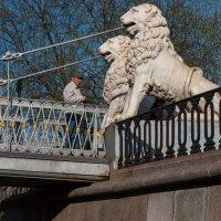 Белые львы Петербурга. :: Евгений Поляков