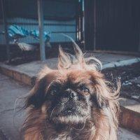 Старый мудрый пес :: Катерина Свердлова
