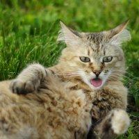 Кошка :: Natalia Adams
