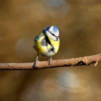 на ветру :: linnud