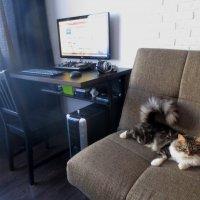 Про кота,который не любит фотографироваться. :: Любовь