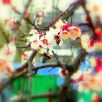 миг весны... :: Назар