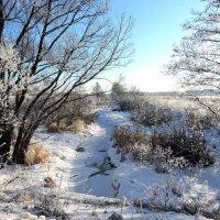 Зимний пейзаж. :: Hаталья Беклова