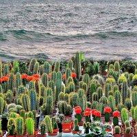 море кактусов :: Александр Корчемный