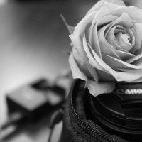 ваза :: Виолетта Костырина