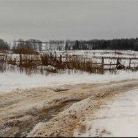 Поворот на Немцово! :: Владимир Шошин