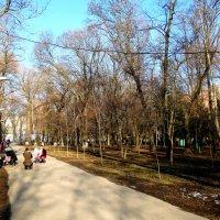 Фото в парке... :: Тамара (st.tamara)