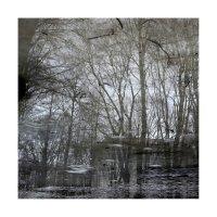 деревья-06 :: наташа савельева