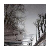 деревья-10 :: наташа савельева