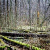 в лесу :: юрий иванов