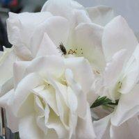 Февральские розы :: Герович Лилия