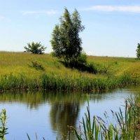 Пейзаж с прудом. :: оля san-alondra