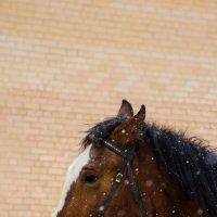 лошадь :: Даниил pri (DAROF@P) pri