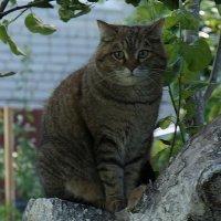 Фотография кошки Матрёны на яблоне :: Юрий А. Денисов