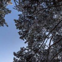 В лесу :: Андрей Баськов