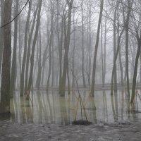 Туман. :: Харис Шахмаметьев