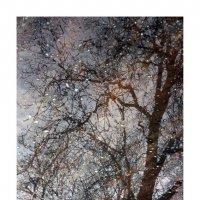 деревья-11 :: наташа савельева