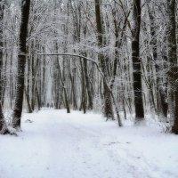 Наша зима... :: *MIRA* **