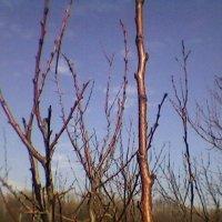 В ожидании Весны :: Миша Любчик