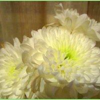 Хризантема была у солнышка в гостях... :: Мила Бовкун