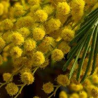 Желтые шарики... :: Юрий Стародубцев