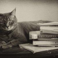 Кот ученый.. :: лиана алексеева