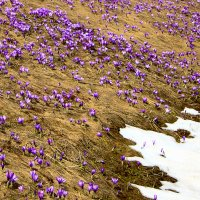 Весна наступает! Урррааа! :: Valery Penkin