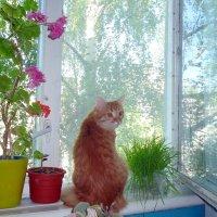 Кошка на окошке :: Елена Федотова