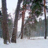 картинка зимы... :: Галина Филоросс
