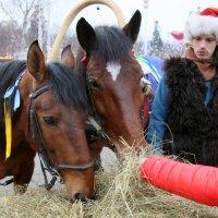 Сегодня можно покормить лошадок и с рук :: Олег Лукьянов