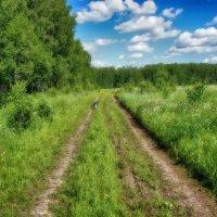 Вдоль леса.. :: марк