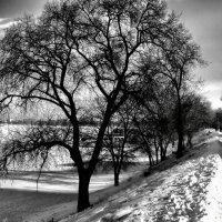 Прогулка по набережной Энгельса,левому берегу Волги :: Елена ТАРАСЕНКО