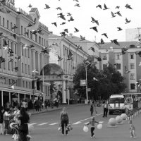 Птицы города :: Вера Шамраева