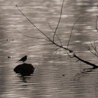 Весна однако!!!! :: Евгений Якубсон