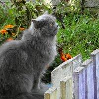 1  Марта-день кошек ! :: nadyasilyuk Вознюк