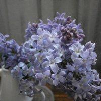 Весна пришла!... :: Алёна Савина