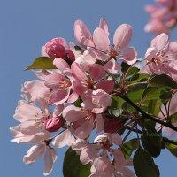 А в душе весна! :: Вера Моисеева